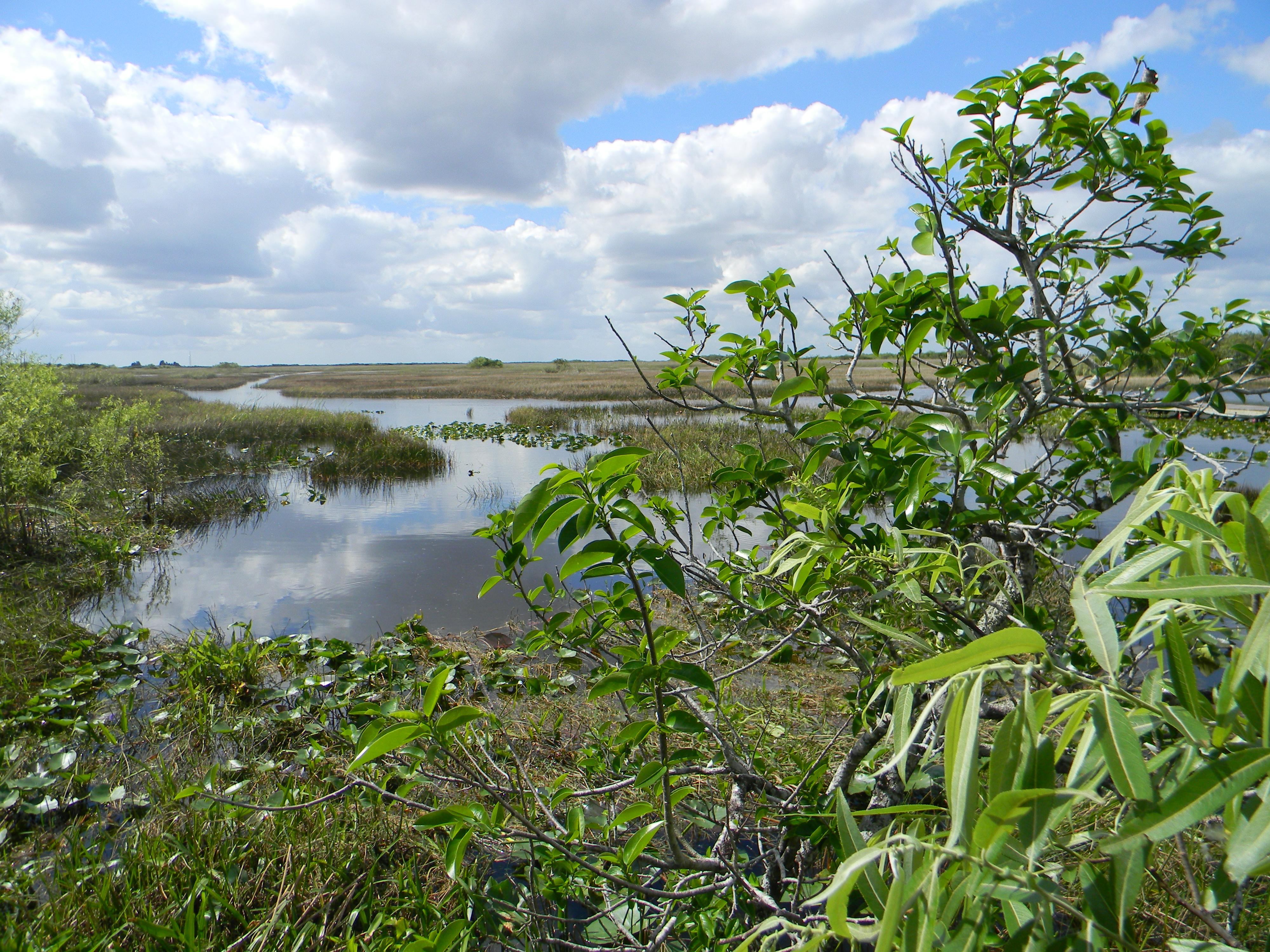 Die Everglades sind ein Fluss