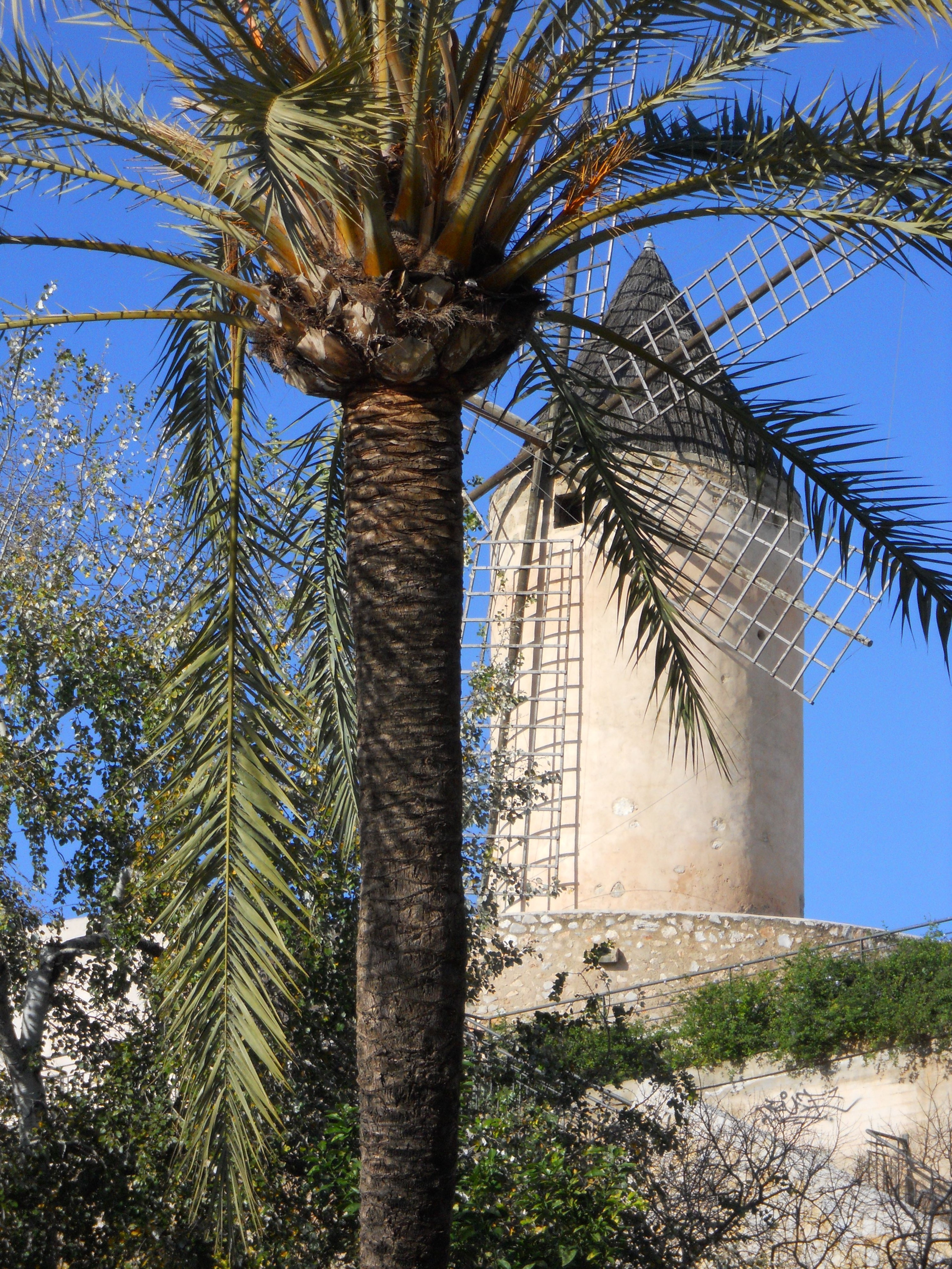 Windmühle in Palma