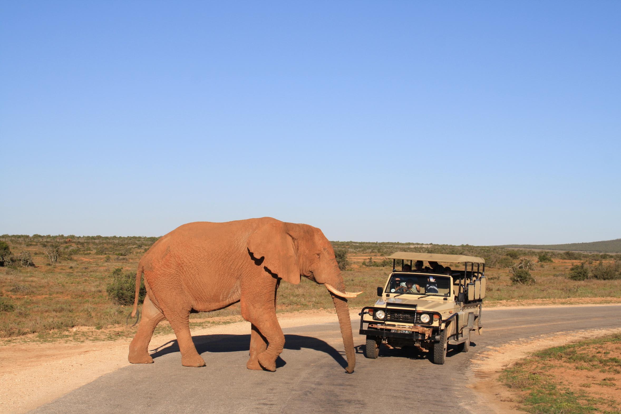 Safari Elefant Sdafrika